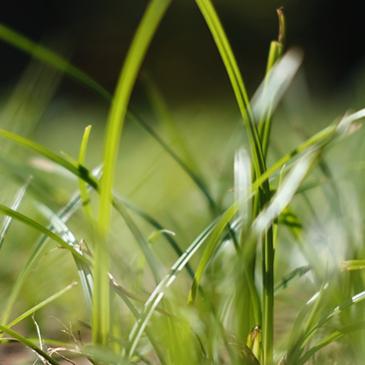Come preparare il terreno per la semina del prato?